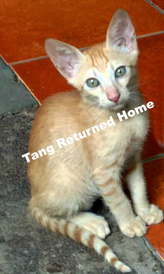 Tang prayers for pets_found