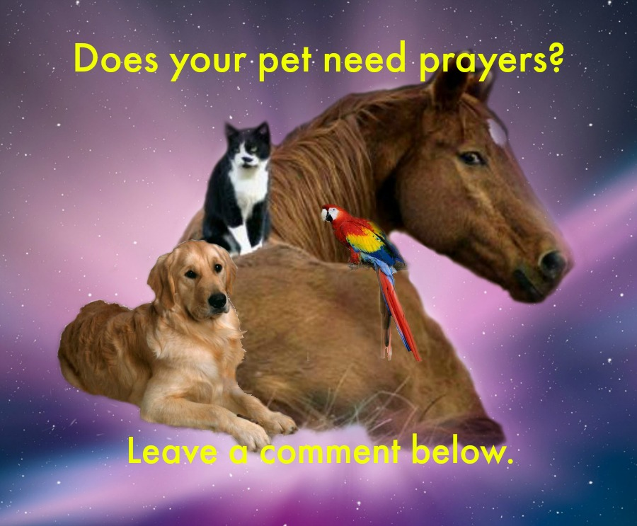 cat horse prayer