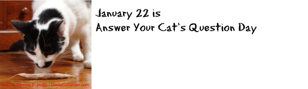 Answer Your Cats Question Day