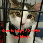 June AdoptAShelter cat month secondary