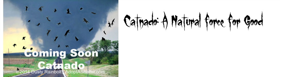 Catnado featured