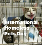 Homeless pets day