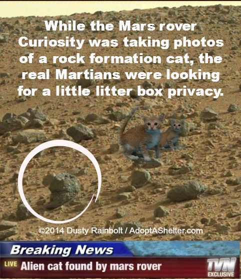 uh mars rover - photo #11