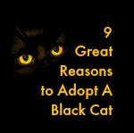 black cat secondary