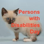 Disabilities Day secondary