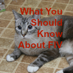 FIV secondary