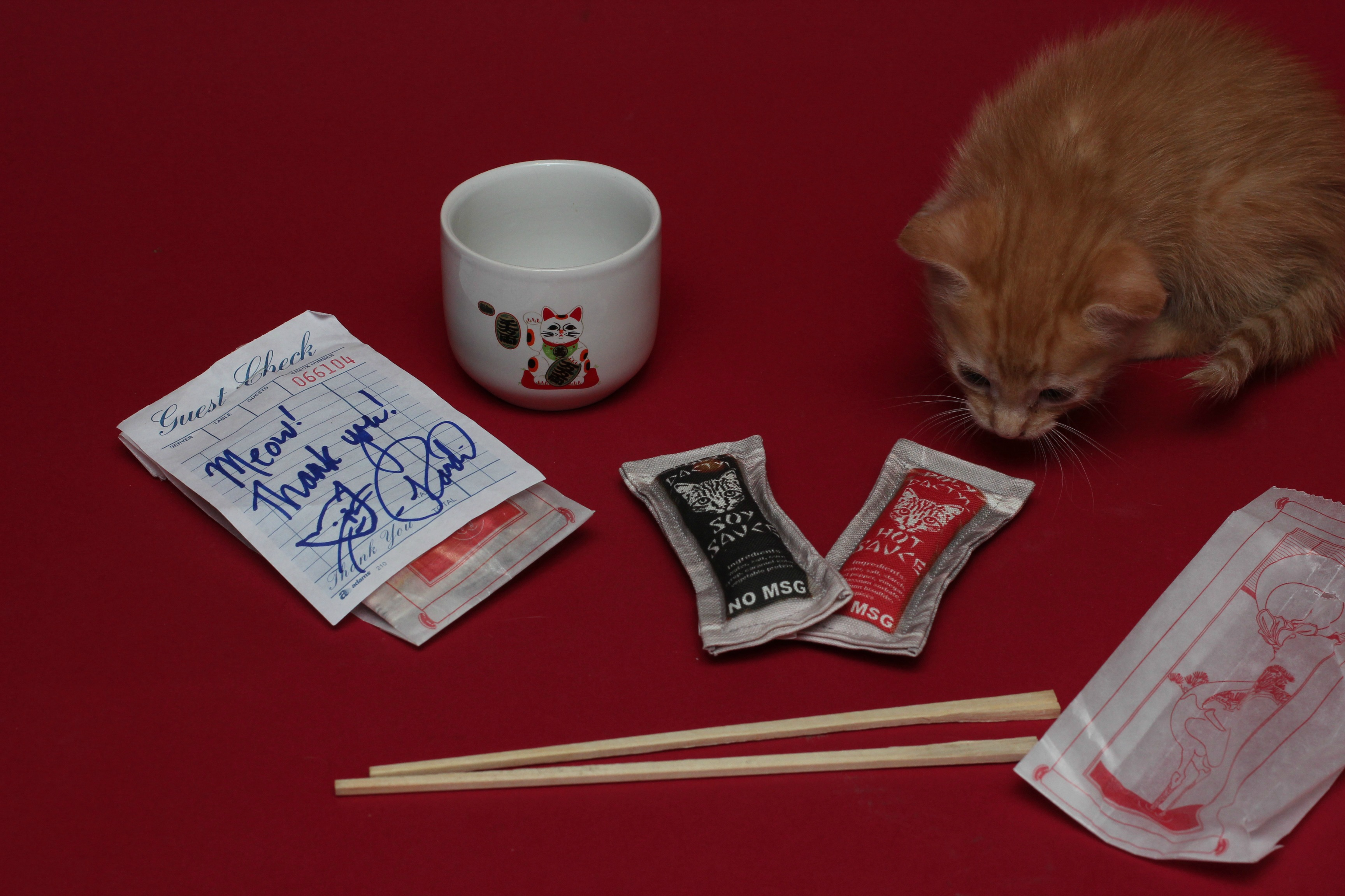 Polydactyl Cats Asian Sauce Packet Cat