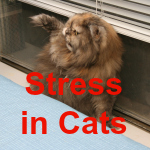 Stress secondary