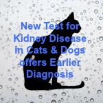 kidney secondary