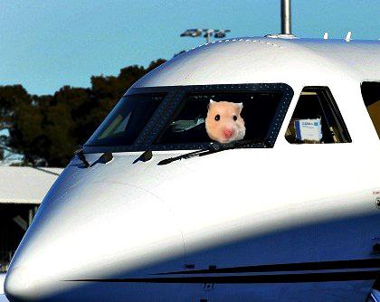 hamsterplane2