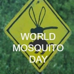 WORLD MOSQUITO DAY SECONDARY