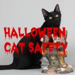 Halloween secondary
