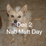 National Mutt Day_secondary