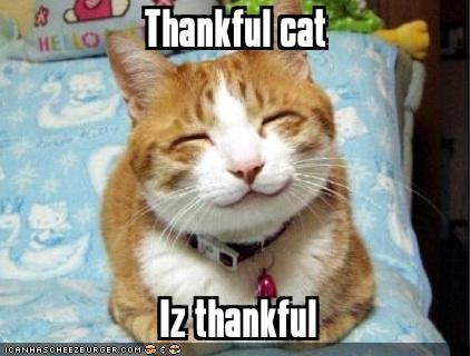 thankfulcat